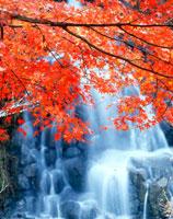 紅葉と滝 20014001595| 写真素材・ストックフォト・画像・イラスト素材|アマナイメージズ
