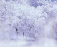 冬の沼と霧氷の木々