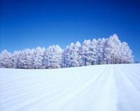 雪原と霧氷の木々