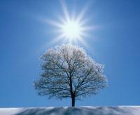 朝日浴びる樹木とダイヤモンドダスト 20014001659| 写真素材・ストックフォト・画像・イラスト素材|アマナイメージズ