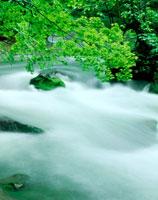 新緑と流れ 20014001709| 写真素材・ストックフォト・画像・イラスト素材|アマナイメージズ