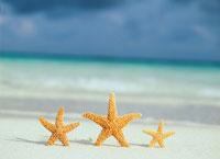 砂浜のヒトデ