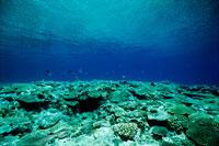 海底風景 20014001801| 写真素材・ストックフォト・画像・イラスト素材|アマナイメージズ