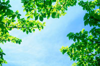 青空と新緑 20014002311| 写真素材・ストックフォト・画像・イラスト素材|アマナイメージズ