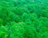 新緑の森林 20014002373| 写真素材・ストックフォト・画像・イラスト素材|アマナイメージズ