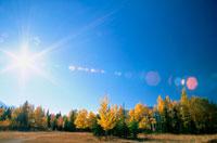 青空と太陽と紅葉の林