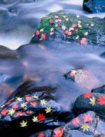 渓流と紅葉の落葉 20014002457| 写真素材・ストックフォト・画像・イラスト素材|アマナイメージズ