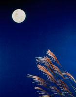 月と夜空とススキ