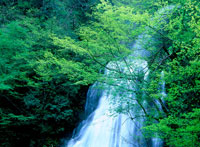 回顧の滝と新緑の木々