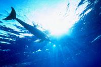 水中のイルカと光り