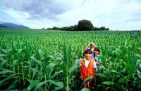 夏の畑の中の子供3人