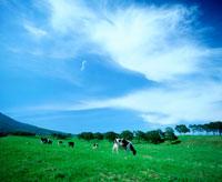 青空と雲と草原と牛
