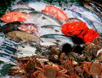 魚貝類集合 20014003022| 写真素材・ストックフォト・画像・イラスト素材|アマナイメージズ