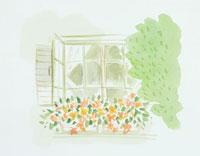 窓と花のイラスト 20014003105| 写真素材・ストックフォト・画像・イラスト素材|アマナイメージズ