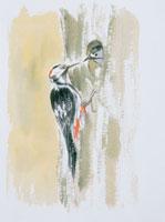 餌をやる野鳥のイラスト