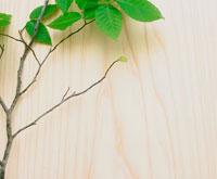 木目とブナの枝