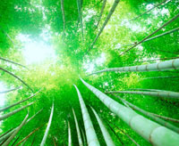 新緑の竹林とこもれ陽 20014003465| 写真素材・ストックフォト・画像・イラスト素材|アマナイメージズ