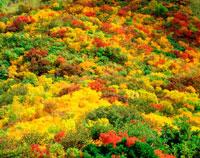 紅葉する山肌の木々 20014003592| 写真素材・ストックフォト・画像・イラスト素材|アマナイメージズ
