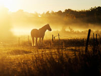 Horse in pasture at sunset