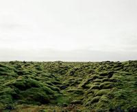 Moss-covered volcanic rocks