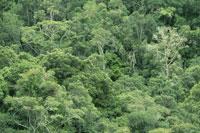 Rainforest hills along Garden Route