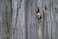 Cat peering through hole