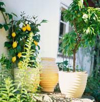 a house with a lemon tree