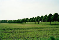 Trees next to a field