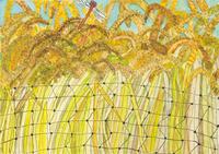 ふるさとの田んぼと、赤とんぼ 20020001069| 写真素材・ストックフォト・画像・イラスト素材|アマナイメージズ
