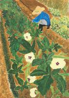 オクラ畑 20020001122| 写真素材・ストックフォト・画像・イラスト素材|アマナイメージズ