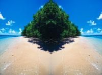 ビーチと木