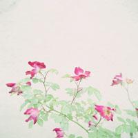 花 20021000161| 写真素材・ストックフォト・画像・イラスト素材|アマナイメージズ