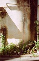 古い壁と植木