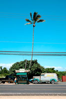 ヤシの木と車 20021000242| 写真素材・ストックフォト・画像・イラスト素材|アマナイメージズ