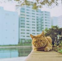塀に座る猫