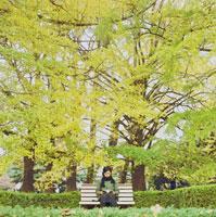 読書する女性と紅葉した銀杏の木 20021000593| 写真素材・ストックフォト・画像・イラスト素材|アマナイメージズ
