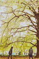大きな銀杏の木と2人の女性