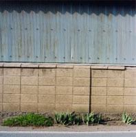 ブロック塀と植物