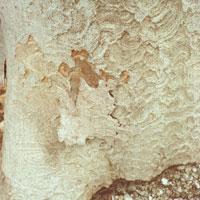 木の根 20021000781| 写真素材・ストックフォト・画像・イラスト素材|アマナイメージズ