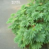 植物 20021000791| 写真素材・ストックフォト・画像・イラスト素材|アマナイメージズ