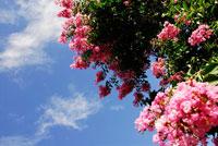 花と空 20021000793| 写真素材・ストックフォト・画像・イラスト素材|アマナイメージズ