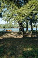 公園のベンチに座る男性と自転車 20021000941| 写真素材・ストックフォト・画像・イラスト素材|アマナイメージズ
