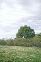自転車と木 20021000953| 写真素材・ストックフォト・画像・イラスト素材|アマナイメージズ