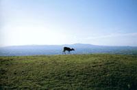 鹿と空 20021000959A| 写真素材・ストックフォト・画像・イラスト素材|アマナイメージズ
