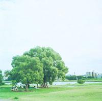 大きな木の下でアウトドアをする人々 20021001005| 写真素材・ストックフォト・画像・イラスト素材|アマナイメージズ