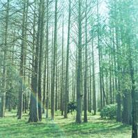 枯れた木の林 20021001023| 写真素材・ストックフォト・画像・イラスト素材|アマナイメージズ
