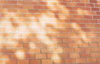煉瓦の壁に差す光