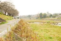河原の緑 20021001113| 写真素材・ストックフォト・画像・イラスト素材|アマナイメージズ