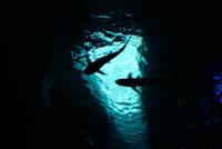 水中を泳ぐサメのシルエット