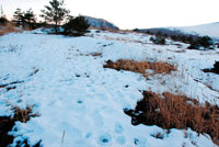 雪の野原 20021001161| 写真素材・ストックフォト・画像・イラスト素材|アマナイメージズ